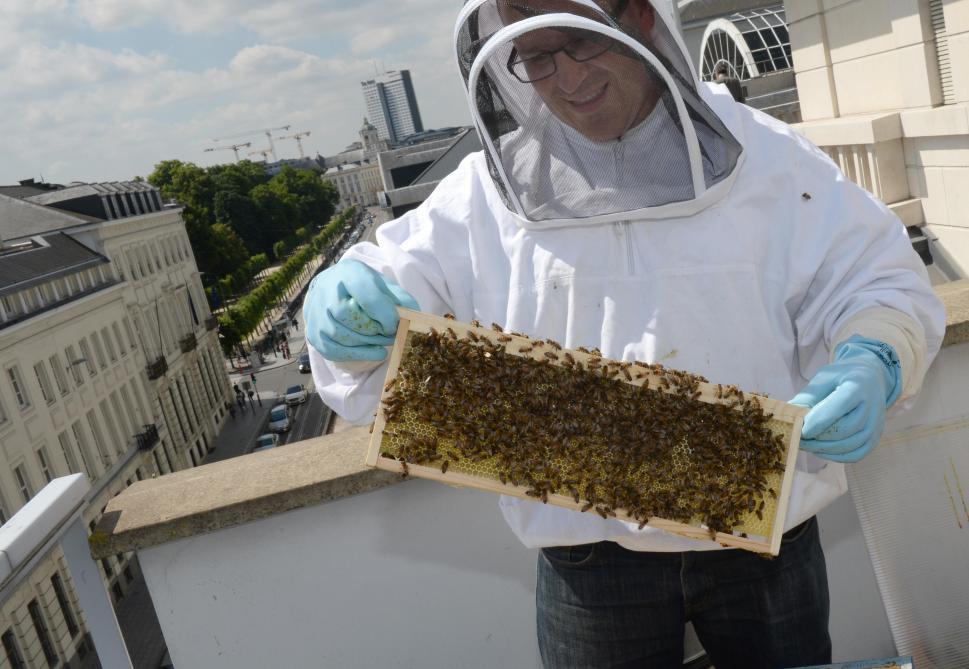 L'enfer est pavé de bonnes intentions. Trop d'abeilles domestiques, cela nuit aux abeilles sauvages. © René Breny.
