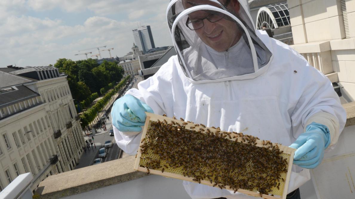 Trop de ruches sur le territoire bruxellois?