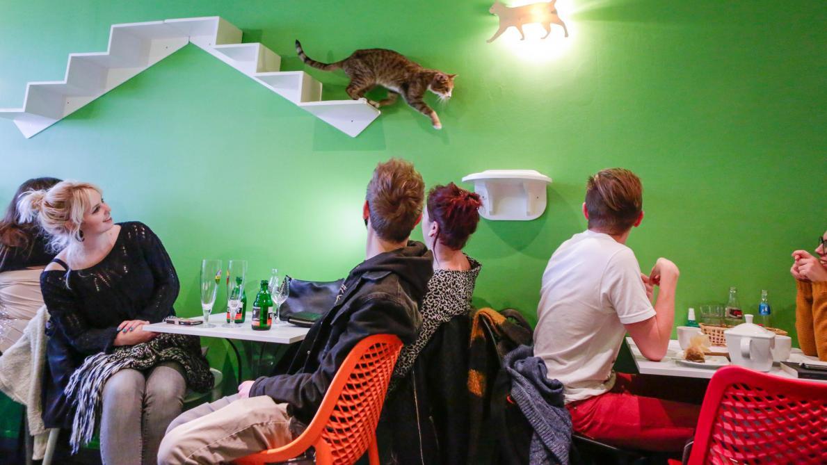 Ouverture De Deux Neko Cafés Des Bars à Chats Le Soir