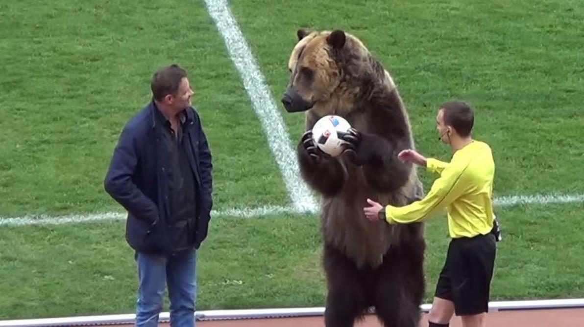 Un petit club russe prend un ours vivant comme mascotte !