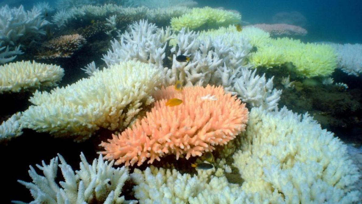 500 millions de dollars pour sauver la Grande barrière de corail — Australie
