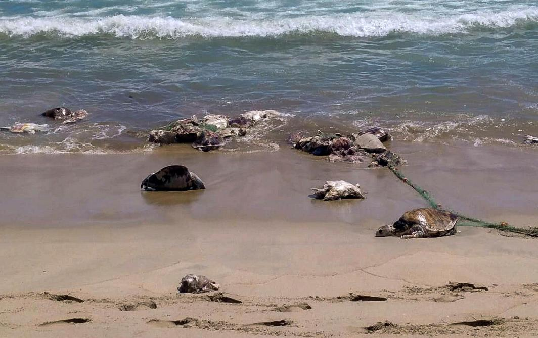 Mexique: 300 tortues retrouvées mortes dans le Pacifique