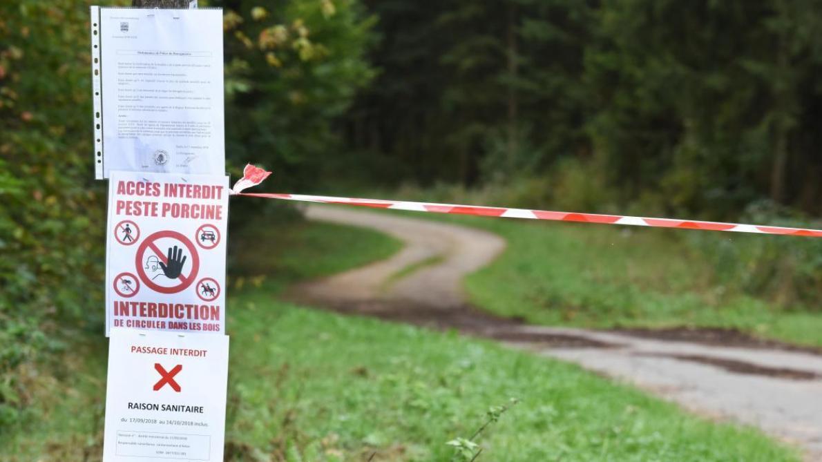 Peste porcine  le périmètre de sécurité scindé en 3 zones distinctes ... 3e1f8dbe3c24
