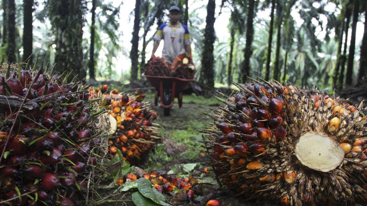 Oreo nuit-il aux orangs-outans — Huile de palme