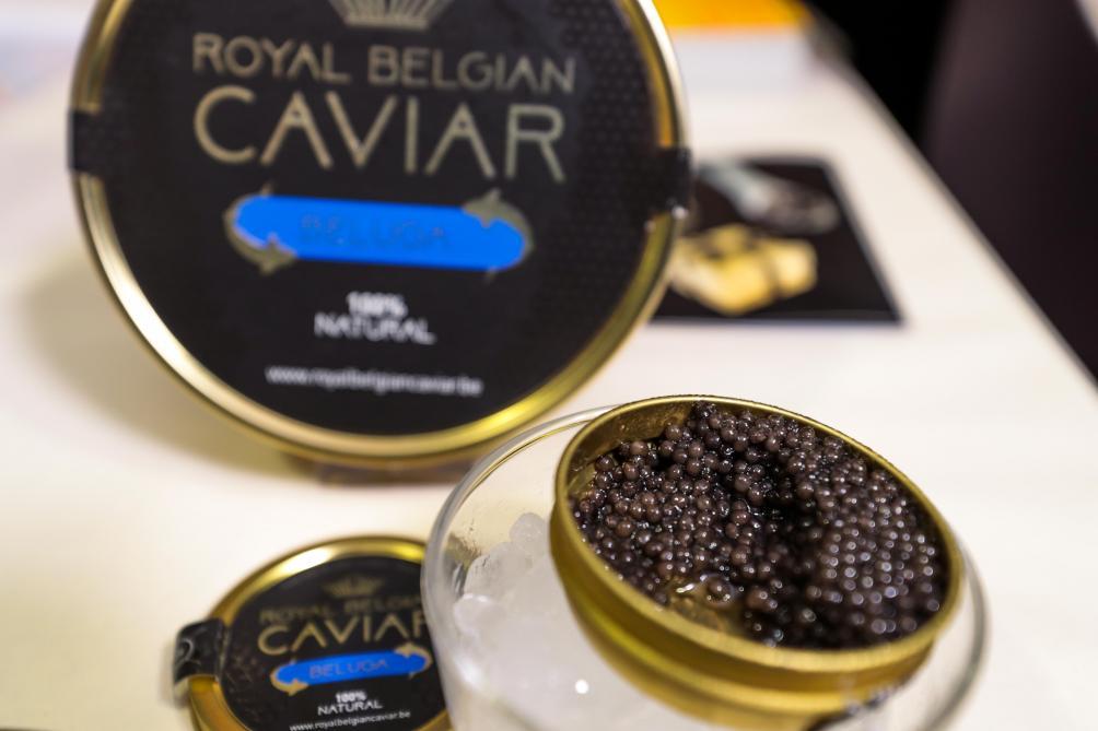 L'élevage d'esturgeans de la société Royal Belgian Caviar