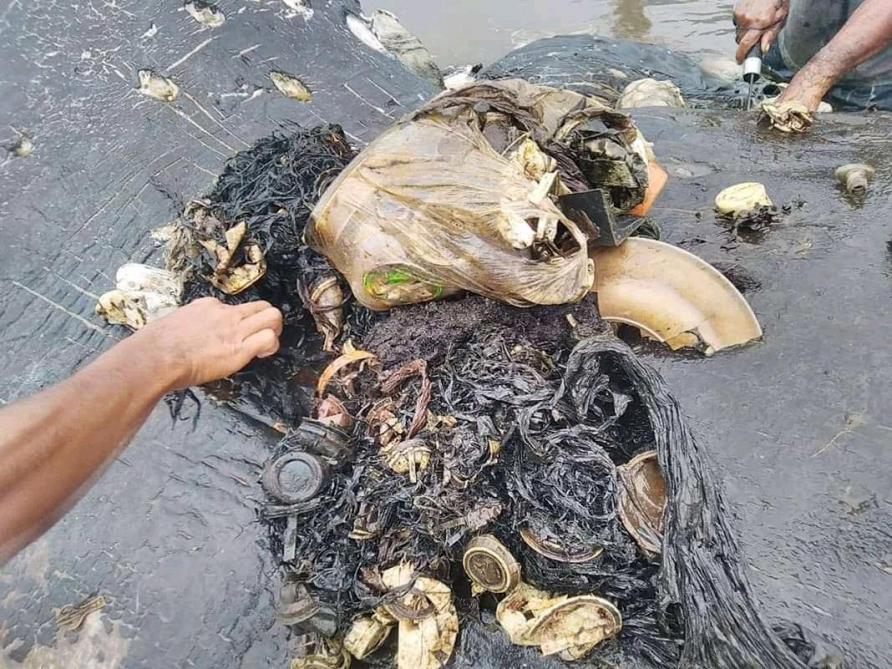 6 kilos de plastique dans le ventre d'une baleine