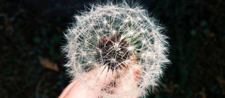Dix idées reçues sur les allergies