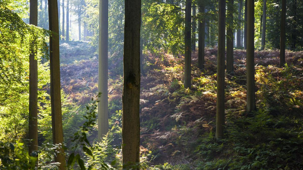 Pays-Bas: un facteur enterrait des milliers de lettres dans une forêt