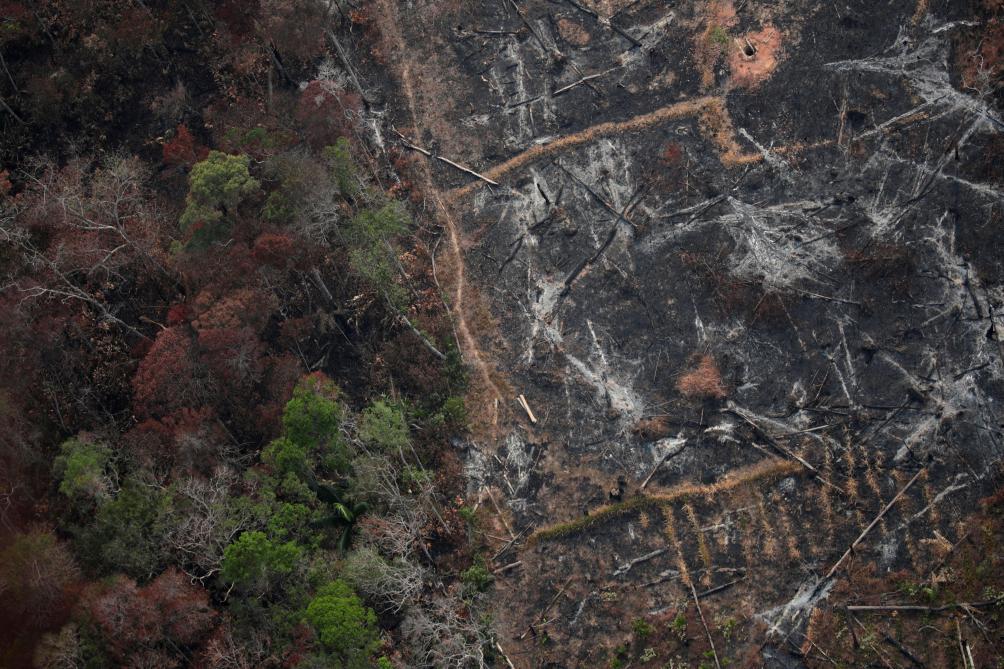 Brésil: Des milliers de départs de feu en Amazonie