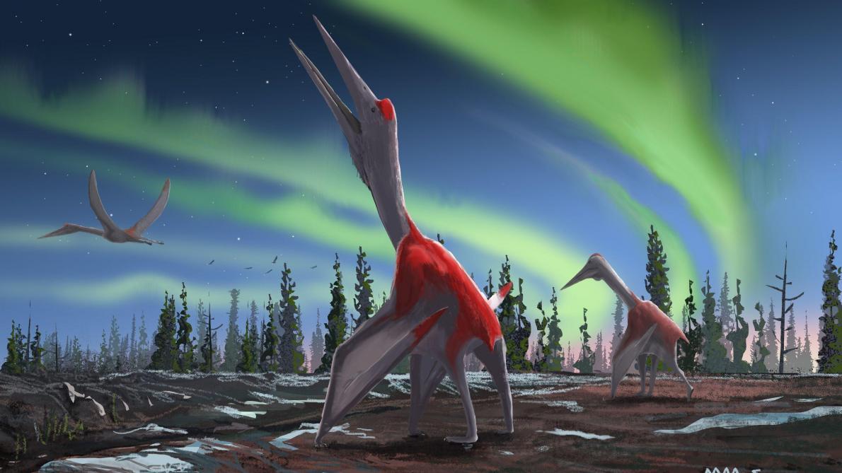 Découverte d'un dragon piégé dans la glace au Canada — Paléontologie