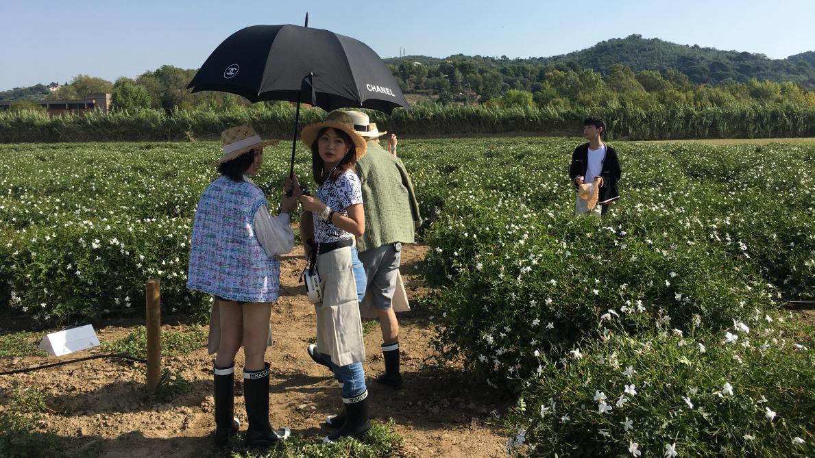Dans les très chics champs de fleurs de Chanel