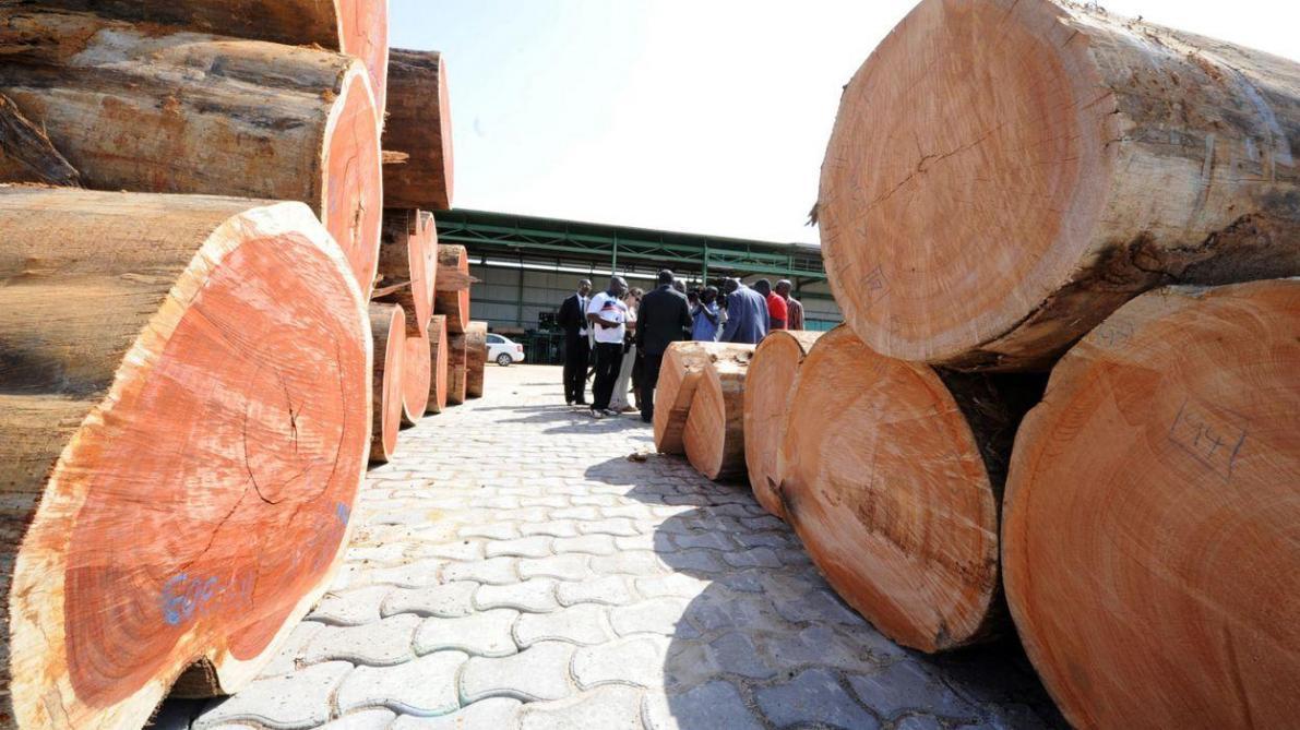 Face au trafic de bois, la Belgique dégaine (enfin) des amendes