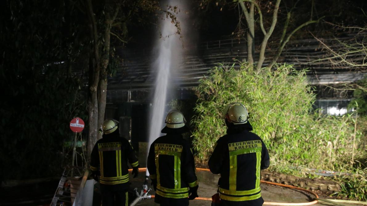 Des dizaines de singes tués dans l'incendie d'un zoo — Allemagne