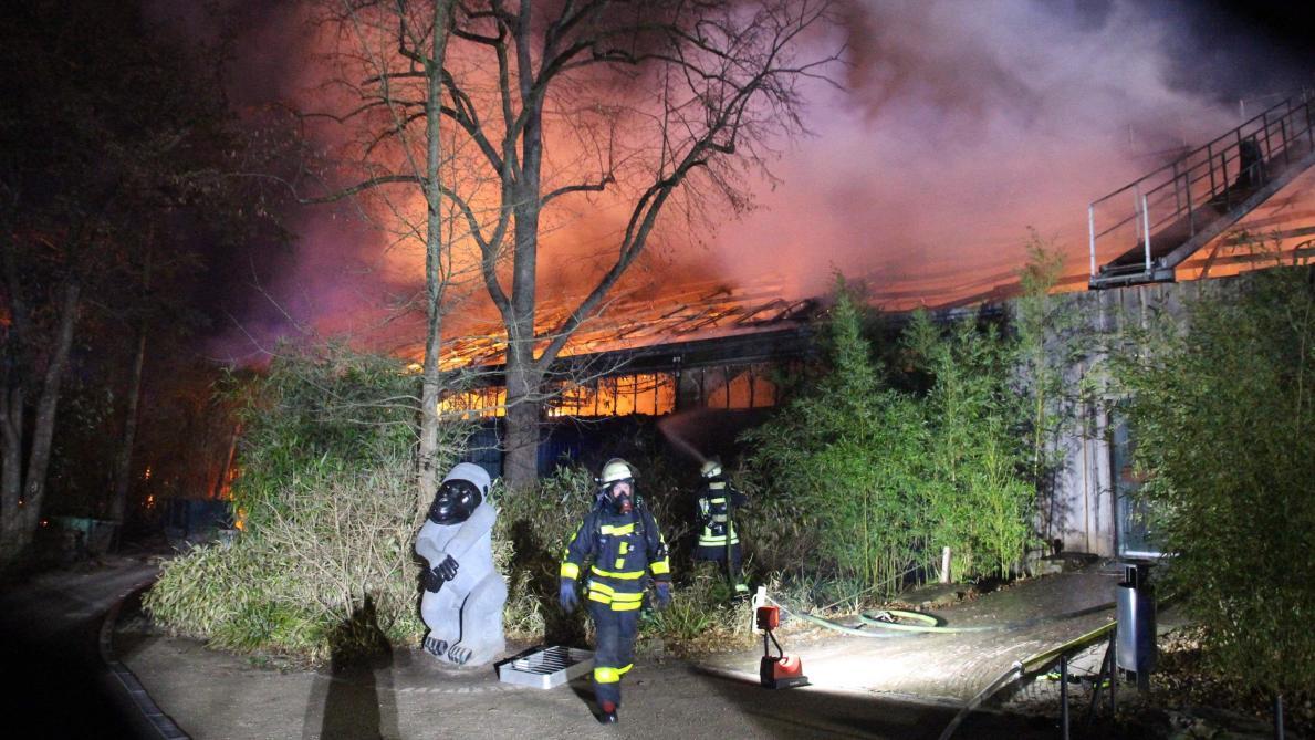 Allemagne: des dizaines de singes meurent dans l'incendie d'un zoo