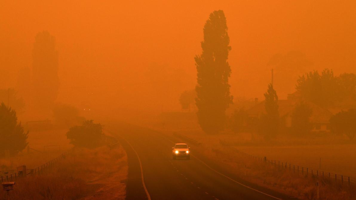 Les incendies australiens ont déjà tué 500 millions d'animaux