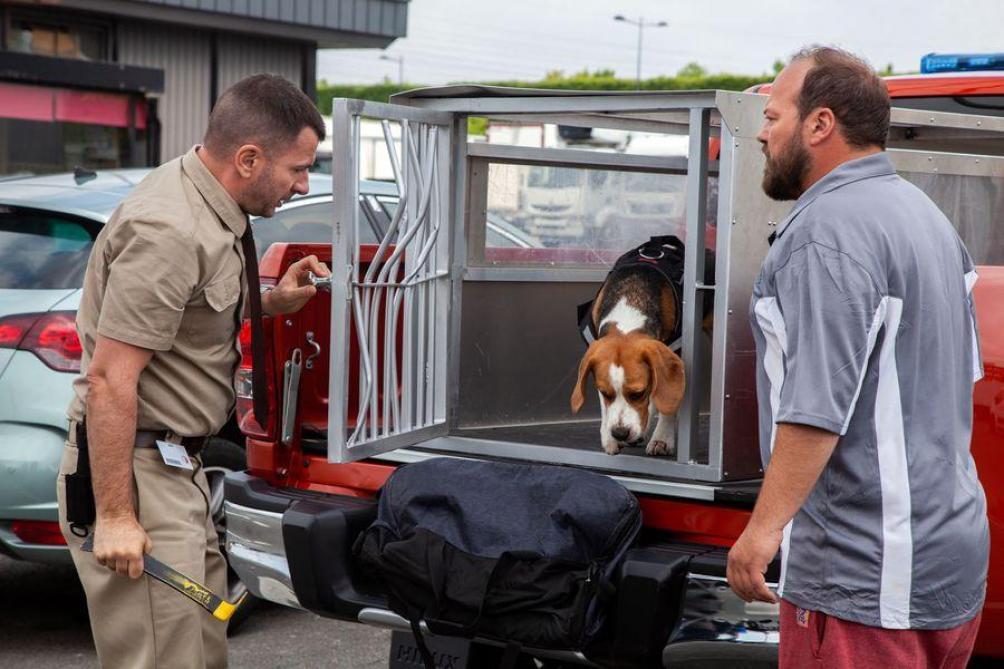 «Lucky» manque de chien: nos critiques des sorties cinéma