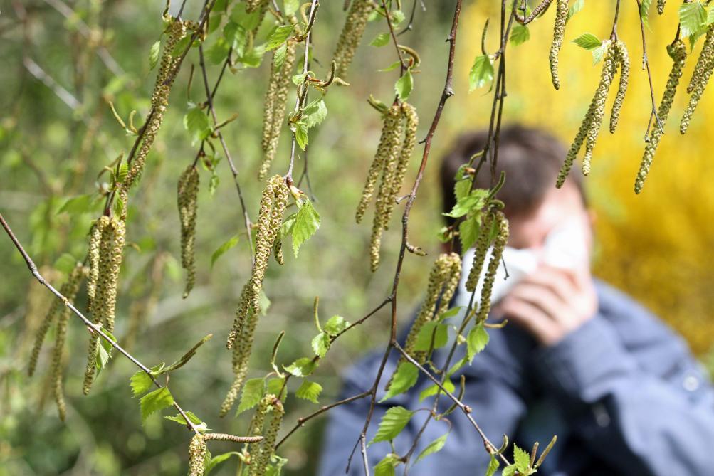 Le retour des pollens inquiète les allergiques - Édition digitale de Mons