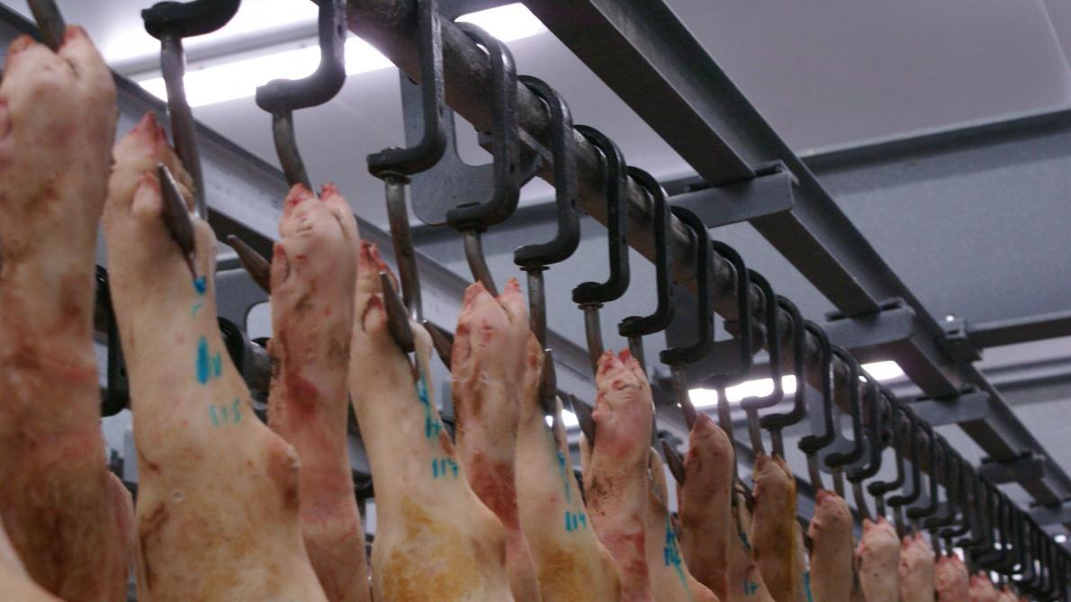 Au moins 50 employés d'un abattoir testés positifs en Belgique — Coronavirus