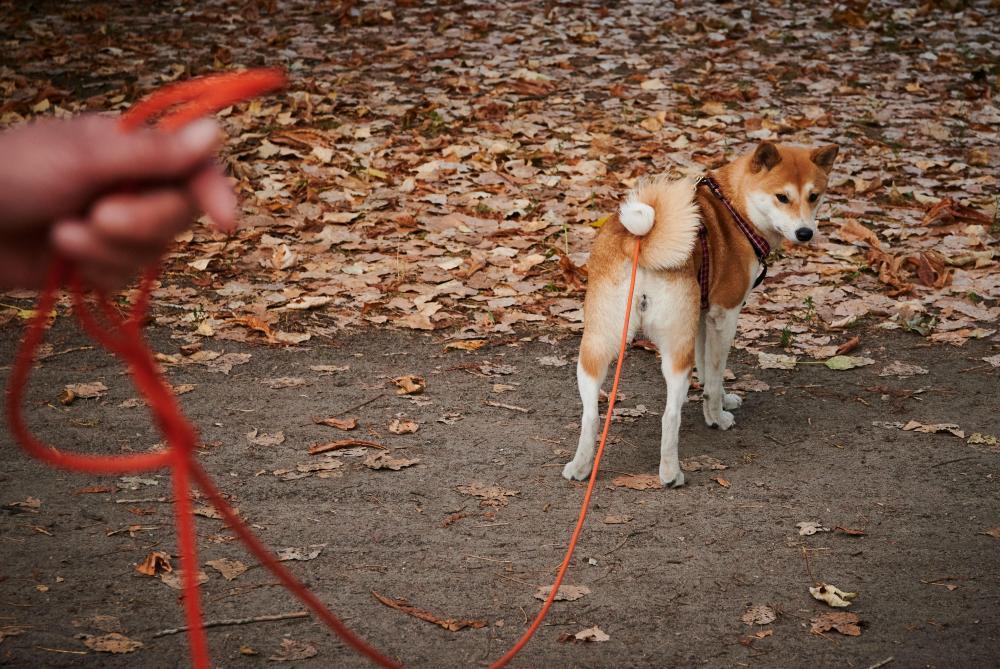 En Allemagne, sortir son chien deux fois par jour pourrait devenir obligatoire