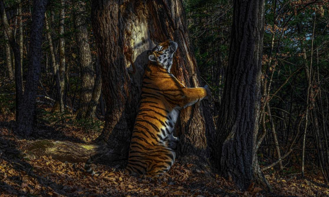 Les photos primées lors du Wildlife Photographer Award 2020