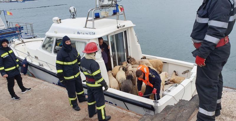Roumanie: un cargo chavire, inquiétude pour 14.600 moutons à bord (afp)
