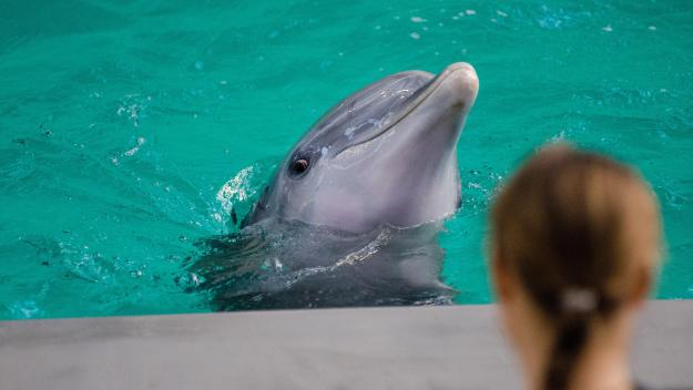 animal-aquarium-dolphin-148836